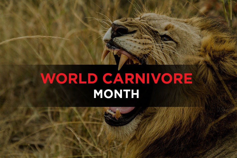World Carnivore Month Featured Image
