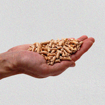 Pellets on a hand