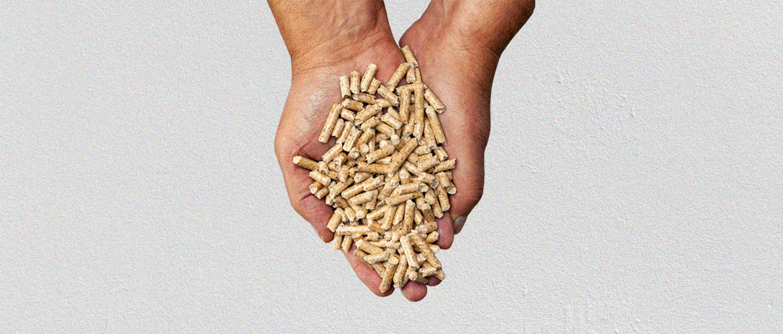 Wood pellets for smokers on a hand
